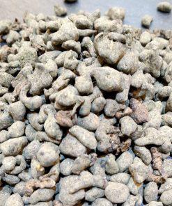 Stone Ginseng Oolong China